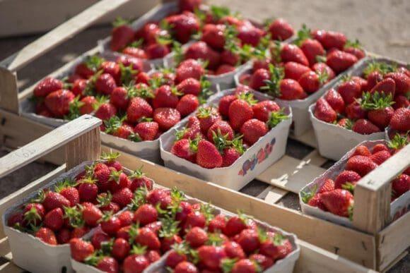 Erdbaisaison mit vielen süßen Früchten