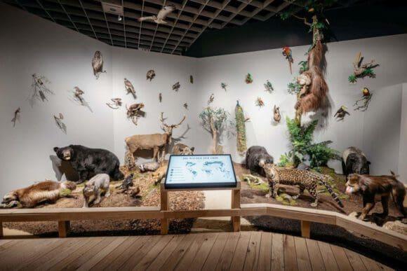 Sonderausstellung in Münster präsentiert den Wald