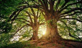 Bäume bilden viele Narrative sagt der Kiepenkerl