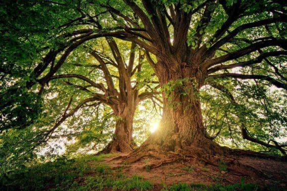 Bäume stehen im Zentrum vieler Narrative