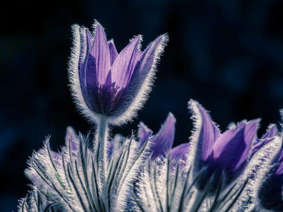Den Botanischen Garten in wundervollen Fotos zeigen