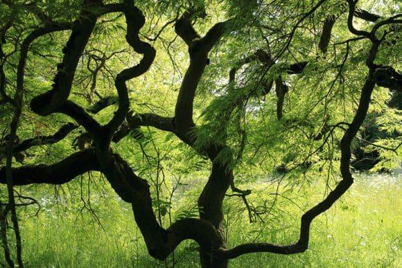 Fotos aus dem Botanischen Garten