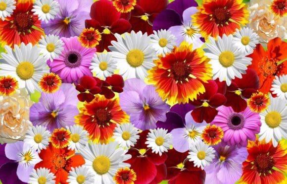 Blumenmeer - Ideen für die Gartengestaltung