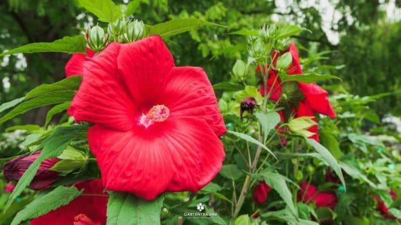 Vielfältige Inspirationen für Gartenfans