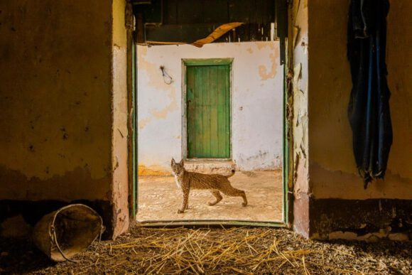 Weltbeste Naturfotografie im Pferdemuseum Museum