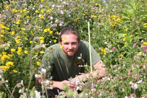 """Doktorand Simon Blümel arbeitet am Forschungsprojekt """"Attraktivität von Blühstreifen für Honigbiene, Wildbienen und Nützlinge landwirtschaftlicher Kulturpflanzen"""" - Foto FH Südwestfalen"""